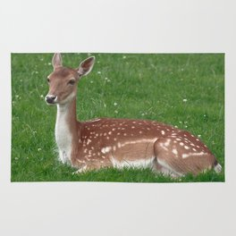 Female Deer Rug