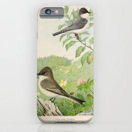 Kingbird Phoebe2 iPhone Case