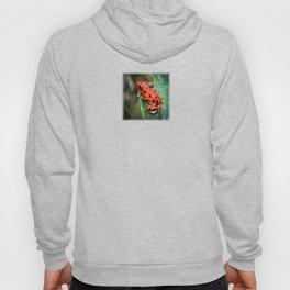 Red Frog Hoody