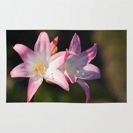 Amaryllis belladonna Rug