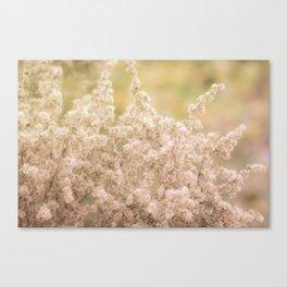 Romantic  Desert Broom Canvas Print