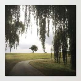 alone tree at storm king Canvas Print