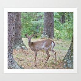 Doe In The Woods Art Print