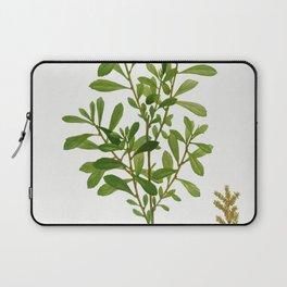 White poplar (Populus alba) from Traite des Arbres et Arbustes que lon cultive en France en pleine t Laptop Sleeve