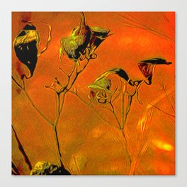 Dry Pods Canvas Print