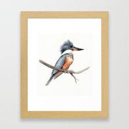 Kingfisher Bird Watercolor Illustration Framed Art Print
