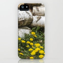 Dead Birch Tree And Living Dandelion iPhone Case