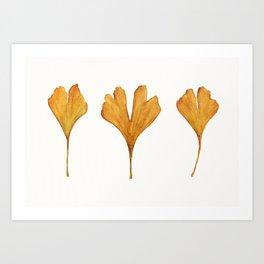 Three Ginkgo Leaves Art Print