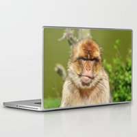 ape Laptop & iPad Skins featuring Barbary ape by Pirmin Nohr