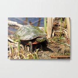 Painted Turtle Standing in a Marsh Metal Print