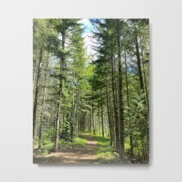 Ski Trail Metal Print