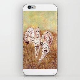 Resting Cheetahs iPhone Skin
