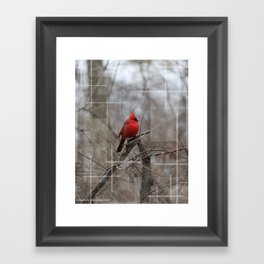 The Cardinal  Framed Art Print