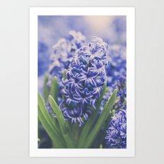 Blue Hyacinth Art Print