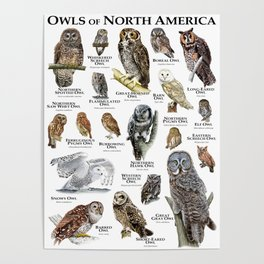 Owls of North America Poster