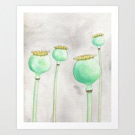 Four Poppy Pods Art Print