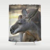 kangaroo Shower Curtains featuring Male Kangaroo by Deborah Janke