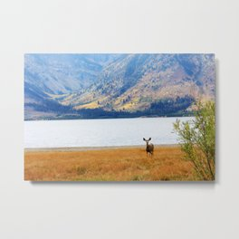 Jackson Lake, Wyoming  Metal Print