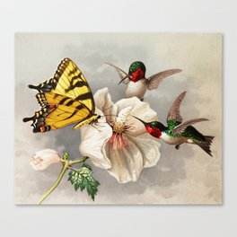 Ruby-throated Hummingbirds & Butterfly Portrait Canvas Print