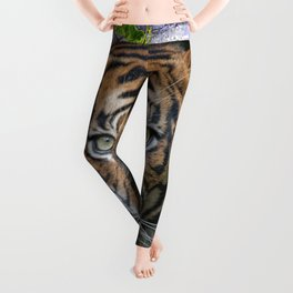 A wildlife, Bengal-tiger Leggings