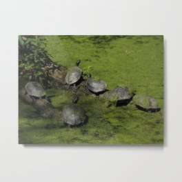 Turtle Riviera Metal Print