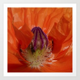 Poppy Time Art Print