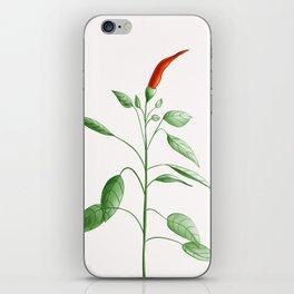 Little Hot Chili Pepper Plant iPhone Skin