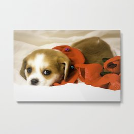 Beaglier Puppy Wearing a Red Collar Lying on a White Sheet Next to Red Roses Metal Print