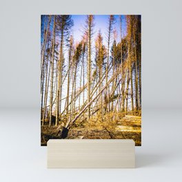 Fallen Trees After Storm Victoria February 2020 Möhne Forest 2 bright Mini Art Print