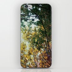 forest 015 iPhone Skin
