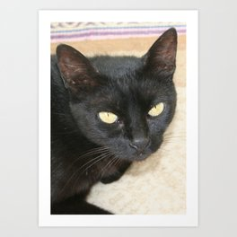 Beautiful Black Cat Portrait  Art Print