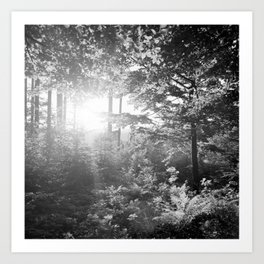 Sundown in the Forest Art Print