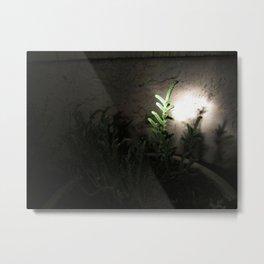 Nighttime in the Garden, 5 Metal Print