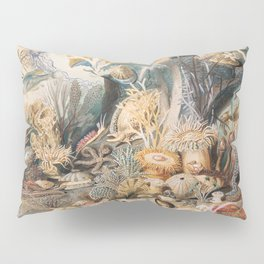 Ocean Life by James M. Sommerville Pillow Sham