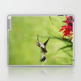 Hummingbird Hovering Laptop & iPad Skin