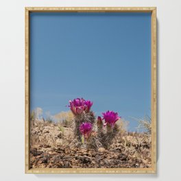 Desert Cacti in Bloom - 4 Serving Tray
