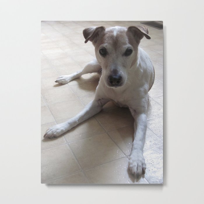 The Attention Of Milo Metal Print