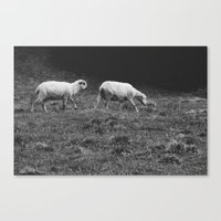 sheep Canvas Prints featuring Sheep by Pati Designs & Photography