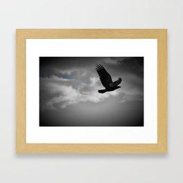 Young Bald Eagle Framed Art Print