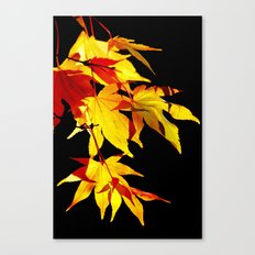 Golden Acer Canvas Print