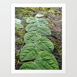 Magic leaves Art Print