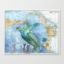 Turtle 4A (Bahamas) Canvas Print