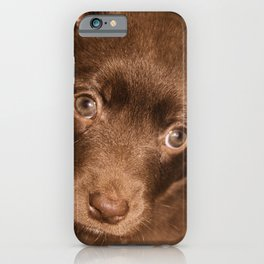 Puppy- Australian Kelpie iPhone Case