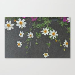 Stacey Canvas Print