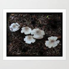 Beautiful Mushrooms Art Print