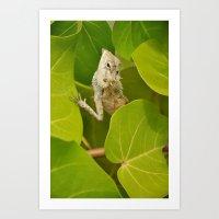 lizard Art Prints featuring Lizard by Bonjourik