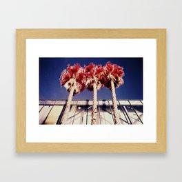 Palm Palms Framed Art Print