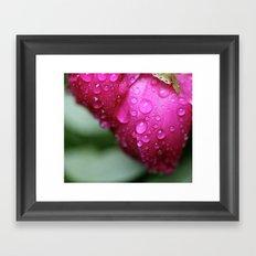 Rain Drops on Roses Framed Art Print