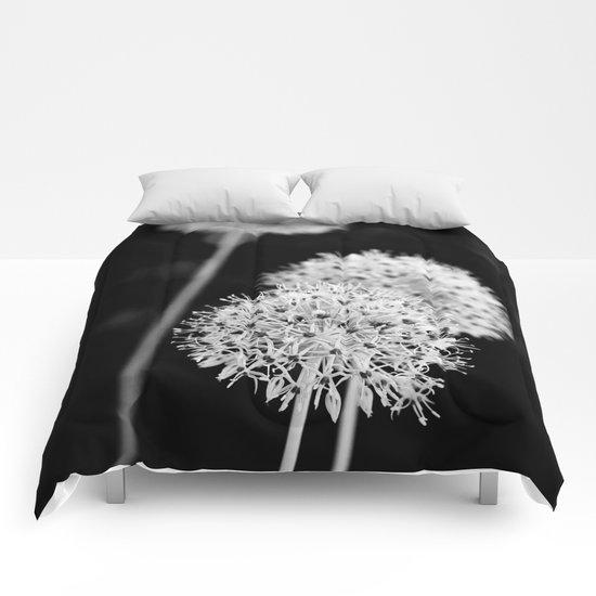 Allium cristophii Comforters
