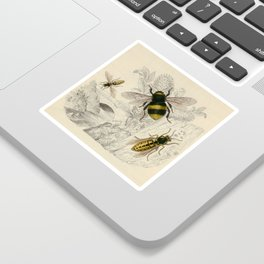 Naturalist Bee And Wasps Sticker